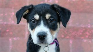 Meet the Puptown puppies