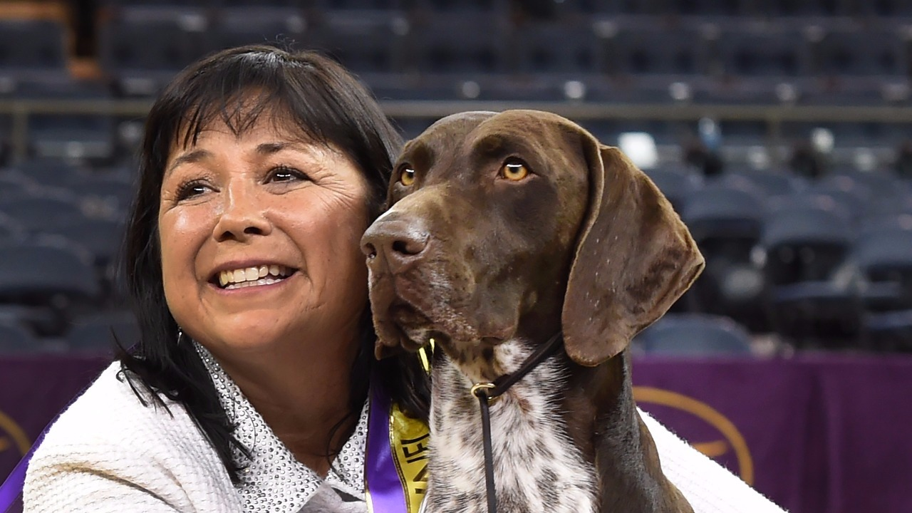 German Shorthaired Pointer Wins 140th Westminster Kennel Club Dog Show