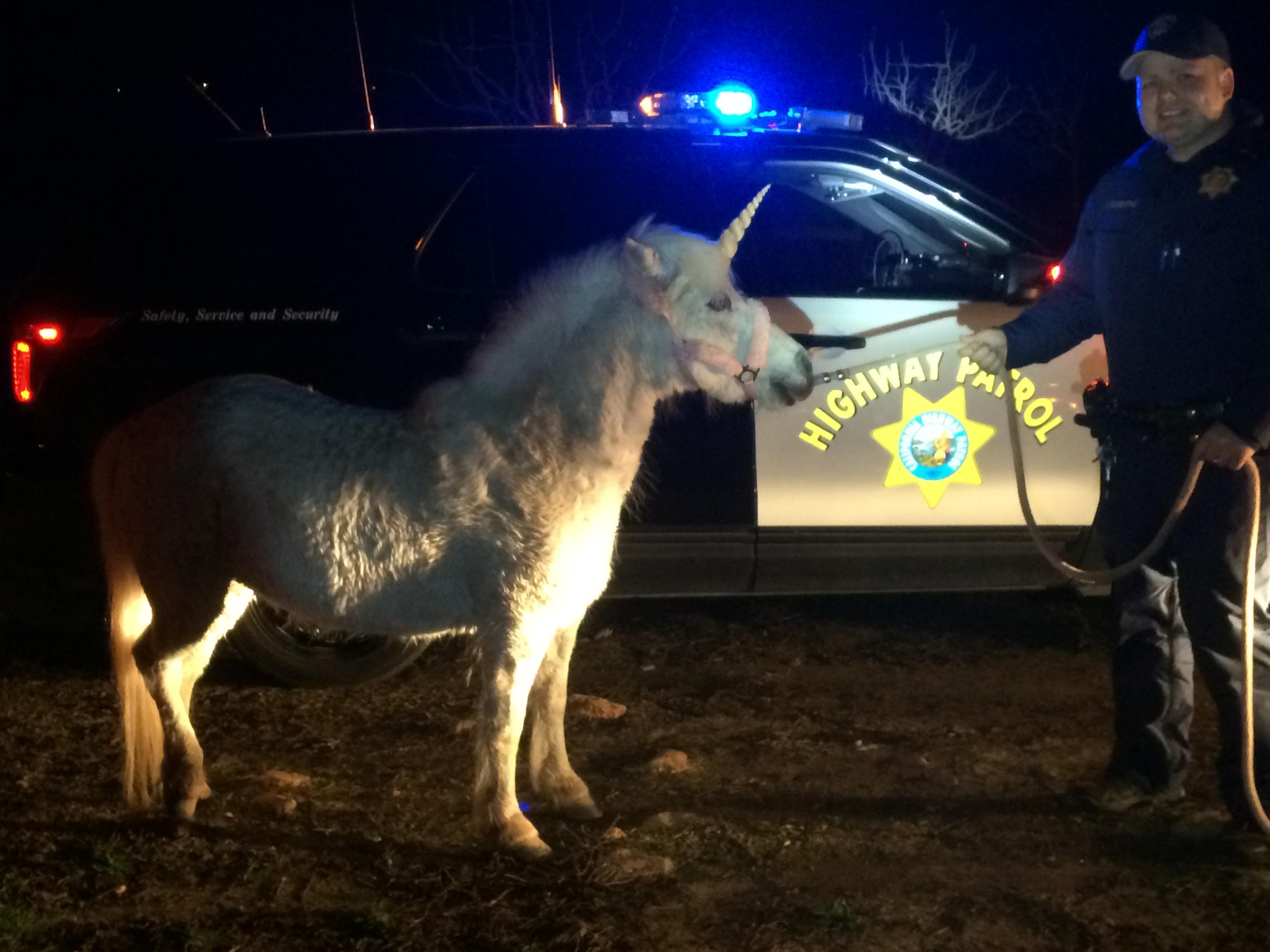 runaway unicorn u0027 prompts police chase 9news com