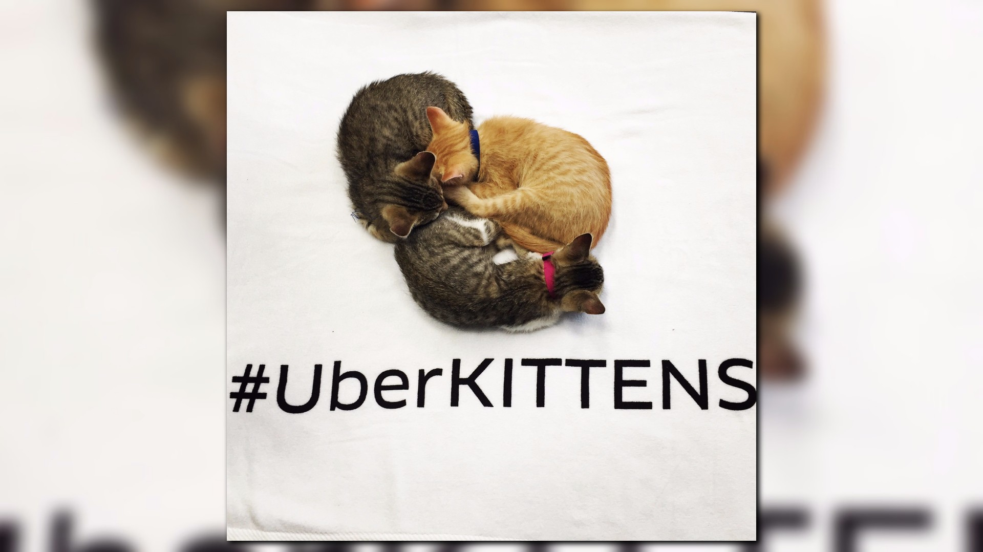 request kittens to your job the push of a button com
