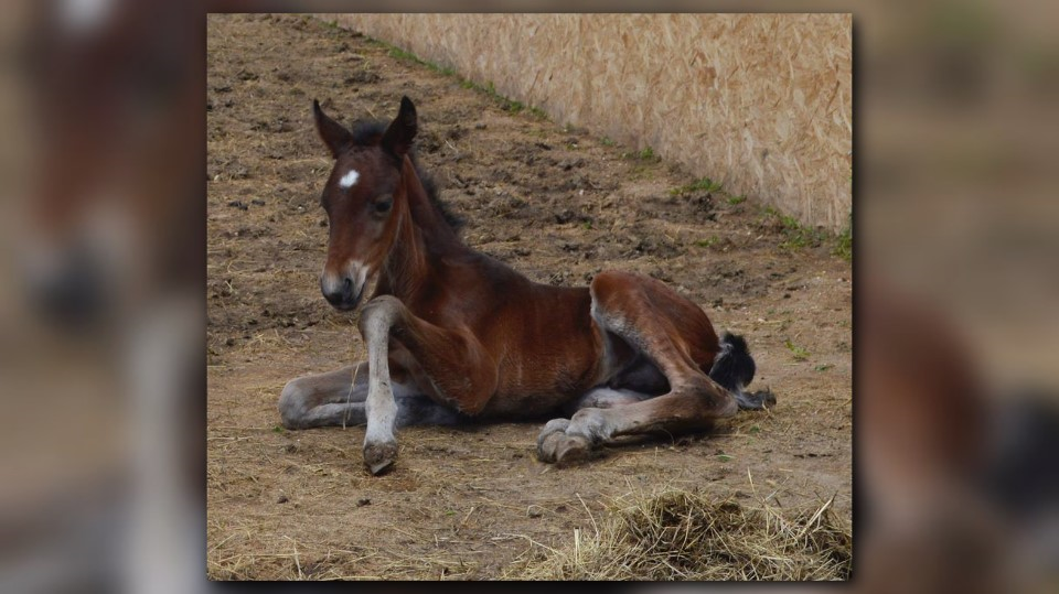 Baby mustang born at Colorado Horse Rescue | 9news.com