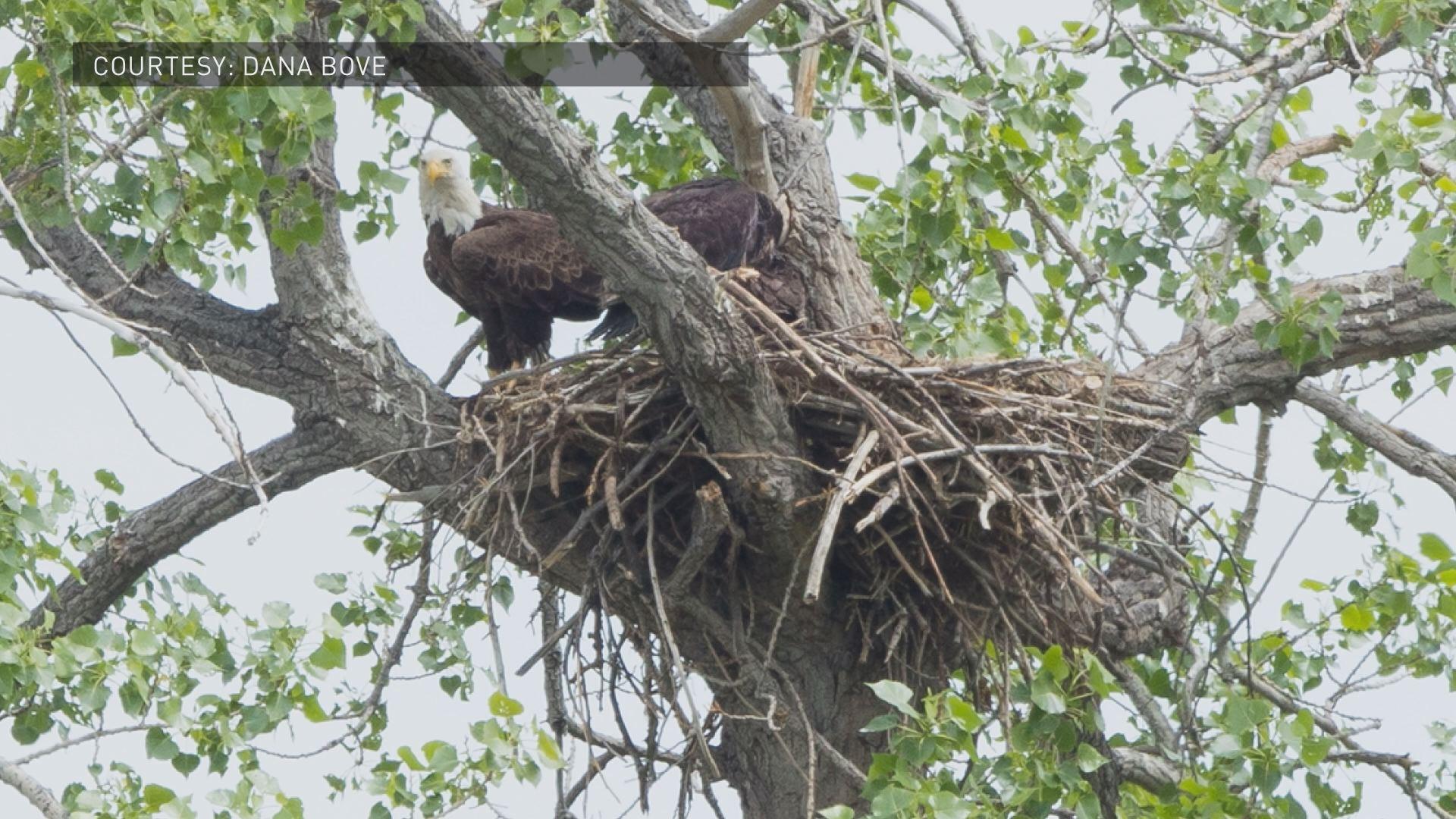 Concerns over eagle 39 s nest mining proposal in boulder for Eagle nest home designs