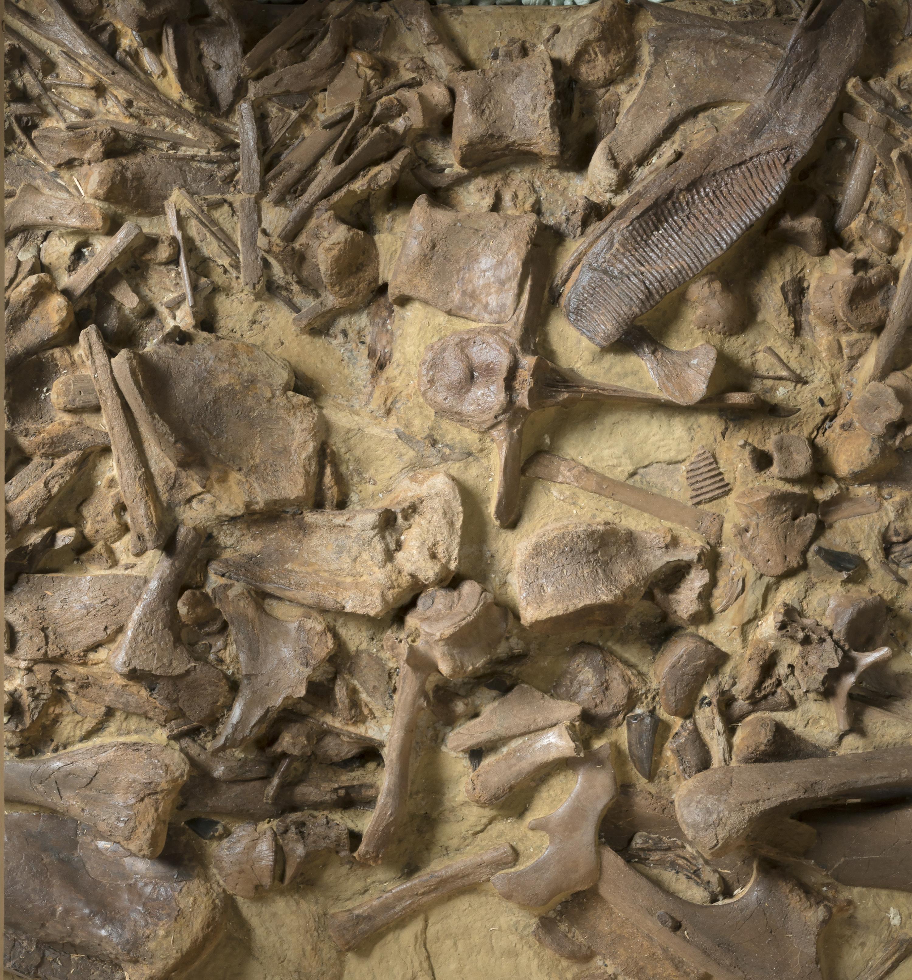 Denver News Closures: 'Spectacular' Dinosaur Fossil Collection